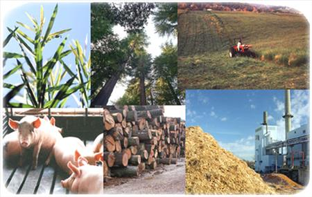File:Biomass2.jpg