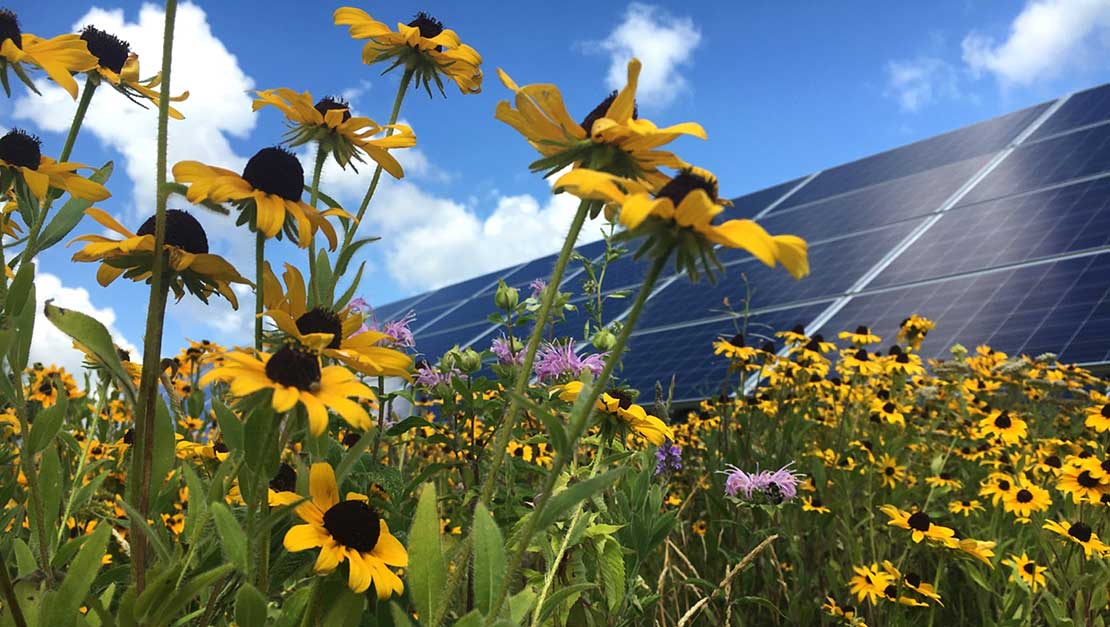 Photo of purple and yellow wildflowers growing below a solar panel