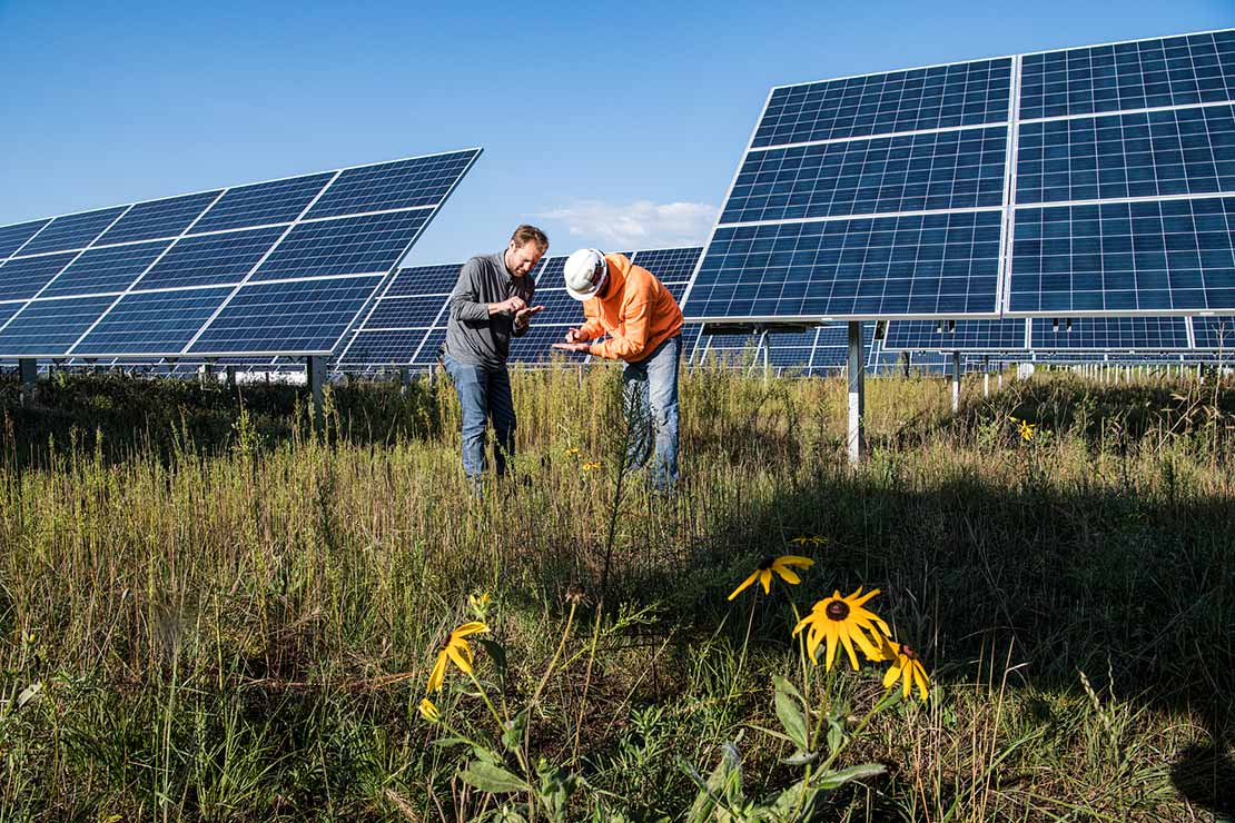 Photo of two researchers in a grassy field in front of solar panels examining a pollinator test plot