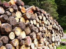 File:Biomasa.jpg