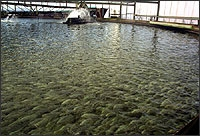 File:Geo Fish Farm.jpg