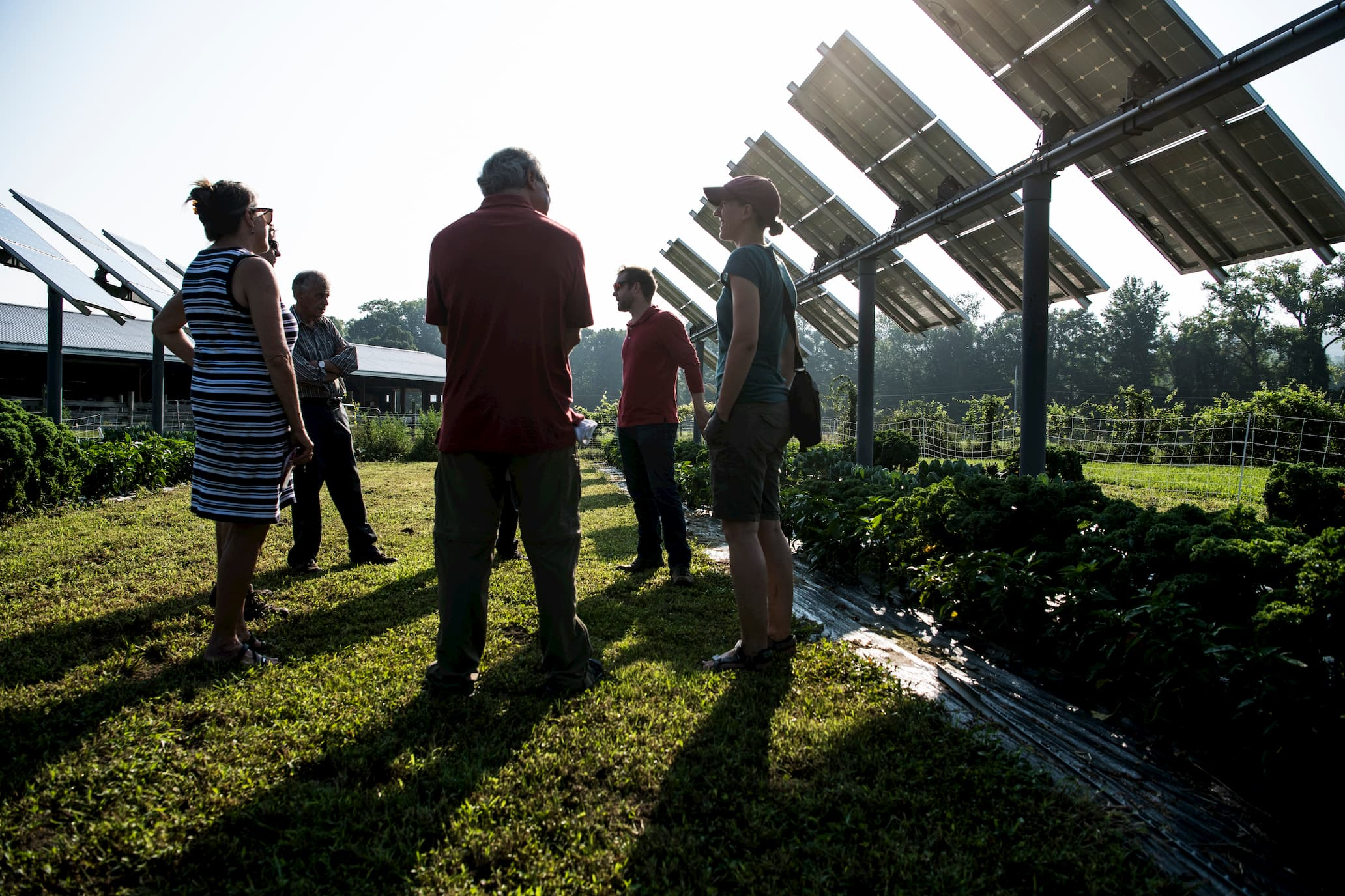 A photo of a group of people standing in a field with solar panels.