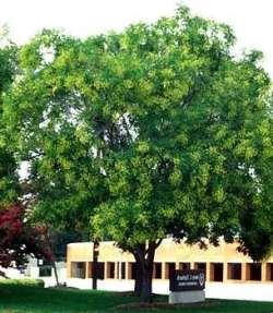 File:Deciduoustree.jpg