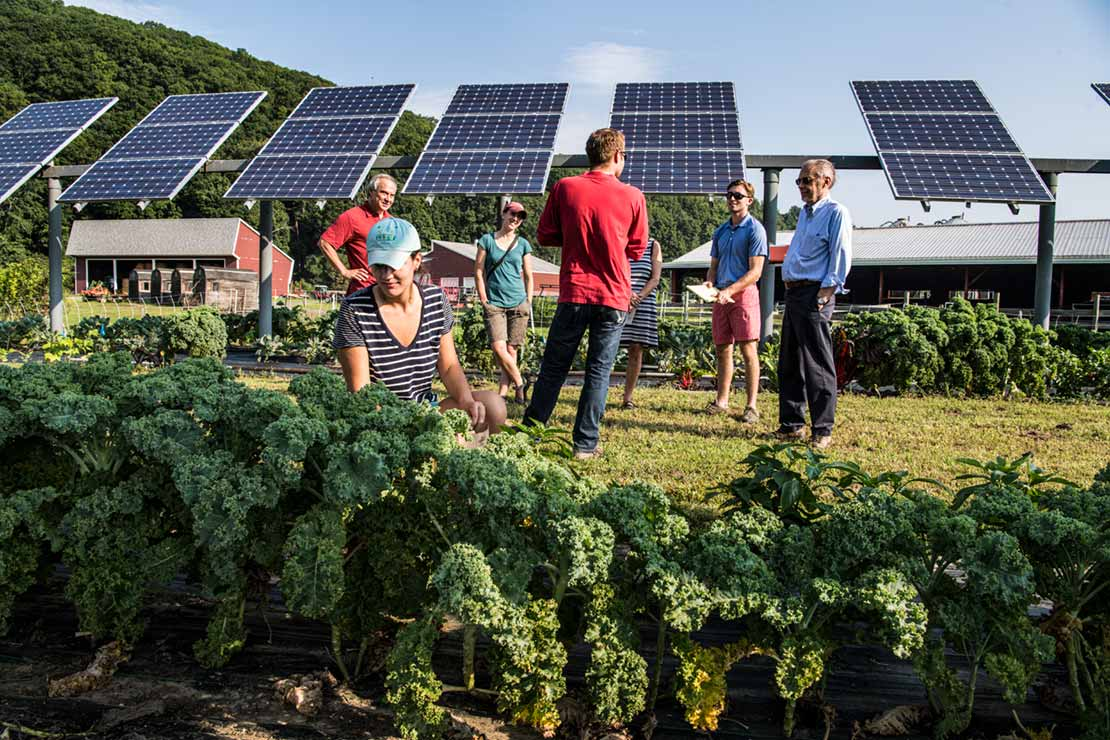 Photo of a woman kneeling to pick a leafy vegetable while a group of people standing behind her have a conversation in front of a solar facility