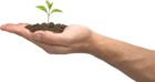 SXC.HU Stock Photo 1005737 arm with plant transparent flipped.png