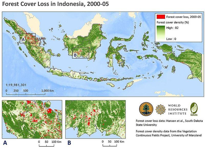 File:IndonesiaForest.JPG