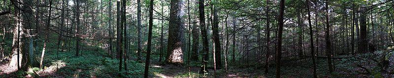 File:Joyce Kilmer Forest Pano-27527.jpg