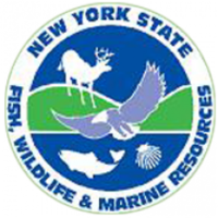 Logo: New York Division of Fish, Wildlife, and Marine Resources
