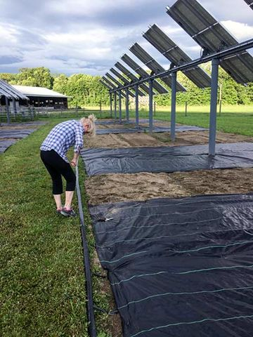 Photo of a woman standing near a farm using her knee to bend a small piece of wire near some solar panels with rows of black tarp and dirt below them