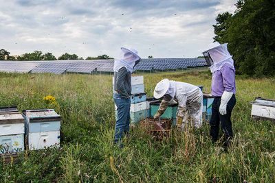 Photo of three individuals in an open grassy field in front of solar panels dressed in beekeeper suits inspecting beehives in brood boxes