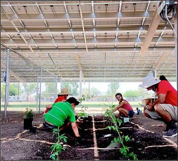 Photo of a group planting vegetation underneath a structure