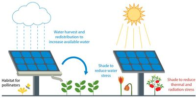 Illustration that shows how sun shining on a solar panel and rain hitting a solar panel can help both vegetation and wildlife grow