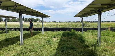 Photo of a man wearing a mask underneath one of three solar panels in an open grassy field