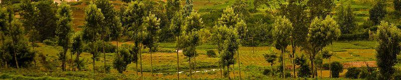 File:Nilgiri Hills trees.jpg