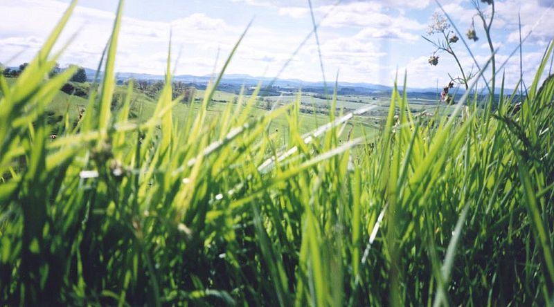 File:Biomass England.jpg